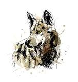 Покрашенный эскиз руки wolfs голова Стоковые Изображения