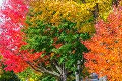 4 покрашенных дерева Стоковая Фотография RF