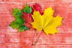 3 покрашенных листь осени Стоковые Фотографии RF