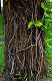 покройте вал корня Стоковое Изображение