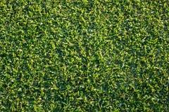 Покройте вниз с взгляда заново накошенной лужайки травы Стоковое фото RF
