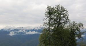 покрынный снежок пиков Стоковые Изображения