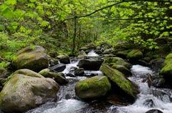 покрытая большая гора мха облицовывает поток Стоковое Изображение RF