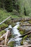 покрытая большая гора мха облицовывает поток Стоковые Изображения