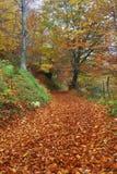 покрытая дорога красного цвета листьев стоковое фото