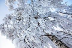 покрытая зима вала снежка Стоковое фото RF