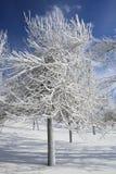 покрытая зима валов снежка парка льда Стоковое Изображение RF