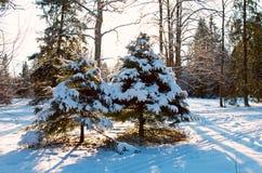 покрытая зима валов снежка Стоковое Фото