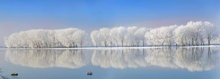 покрытая зима валов заморозка стоковое фото