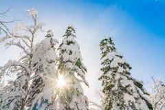 покрытая зима валов снежка Стоковые Фото