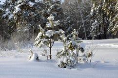 покрытая зима сказа снежка дома fairy пущи деревянная Стоковые Изображения