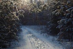 покрытая зима сказа снежка дома fairy пущи деревянная Стоковое фото RF