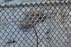 Покрытая льдом загородка звена цепи Стоковое Изображение RF