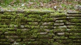 покрытая Мх изгородь Стоковое Фото