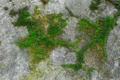 Покрытая Мх старая бетонная стена Стоковые Фотографии RF