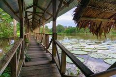 Покрытая дорожка Амазонки Стоковое Изображение RF