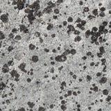 покрытая поверхность утеса лишайника Стоковые Изображения RF