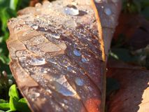 Покрытая росой весна лист рано утром стоковое изображение rf