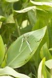 покрытая сеть паука росы Стоковое Фото
