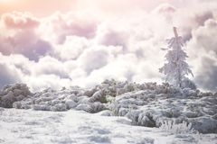 покрытая Снег ель в горах зимы Стоковые Изображения RF