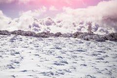 покрытая Снег ель в горах зимы Стоковое Фото