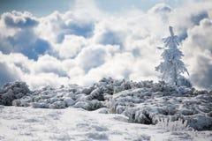 покрытая Снег ель в горах зимы Стоковые Фото