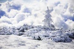 покрытая Снег ель в горах зимы Стоковое Изображение RF