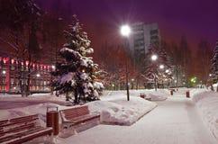 покрытая Снег ель в парке стоковые изображения