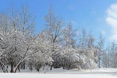 покрытая Снег Москва Ландшафтный парк Mitino после сильного снегопада Стоковая Фотография RF