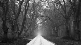 покрытая Снег дорога в хмуром лесе стоковое фото rf