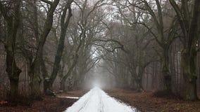 покрытая Снег дорога в хмуром лесе стоковые изображения