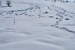 покрытая Снег расчистка с трассировками различных тварей Lago-Naki, главный кавказец Ридж, Россия стоковые изображения