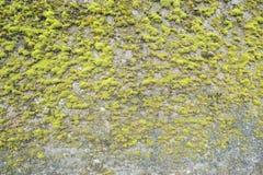 Покрытая стена с мхом Стоковая Фотография RF