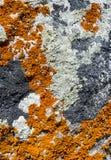 покрытая текстура утеса лишайника Стоковая Фотография