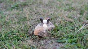 Покрытая эмалью кружка на дне камня нагретого с сухим топливом видеоматериал