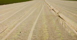 покрытое поле Стоковое Изображение RF