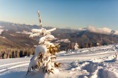 покрытое Снег дерево стоит в горах стоковые фотографии rf