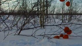 Покрытое снег замедленное движение tangerines видеоматериал