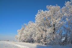покрытые валы снежка дуба Стоковые Фотографии RF