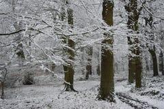 покрытые валы снежка Стоковые Изображения