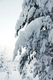 покрытые валы снежка Стоковая Фотография