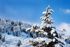 покрытые валы Юта снежка дня солнечные стоковые фото