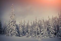 покрытые валы снежка гор горы дома hoarfrost стоковые фото