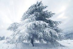 покрытые валы снежка гор горы дома hoarfrost стоковая фотография rf
