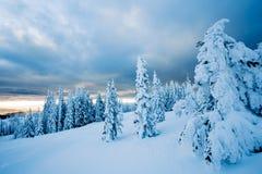 покрытые валы снежка Стоковое Изображение