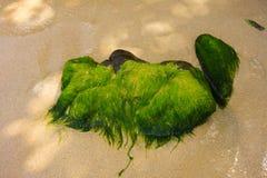 покрытые Водоросл утесы в наветренных островах стоковые изображения