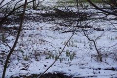Покрытые заводы от снега в парке в Германии Стоковые Фотографии RF