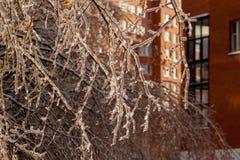 покрытые Лед ветви дерева Стоковое Изображение