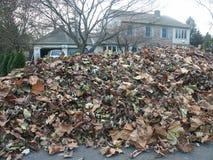 покрытые листья Стоковое Изображение