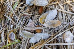 покрытые листья hoarfrost стоковые фото
